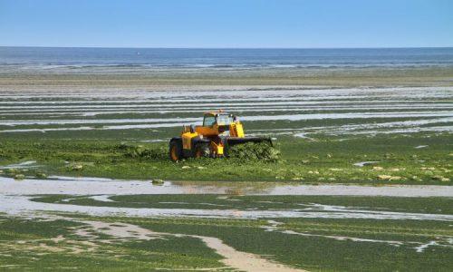 Otranto: i nonni vigili urbani sequestrano le alghe contraffatte