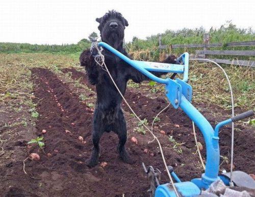 """La rivoluzione green di Monteroni: """"Abbiamo insegnato ai nostri cani come si coltiva la terra""""."""