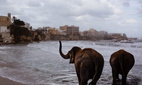 Bollywood sbarca nel Salento, elefanti in mare ma la star sarà di Lecce Lecce