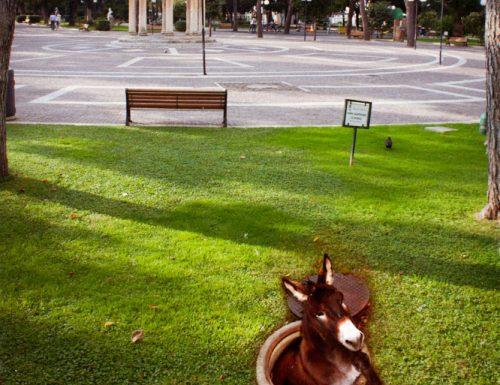 La storia semplice dell'asinello della villa comunale che sta commuovendo i leccesi