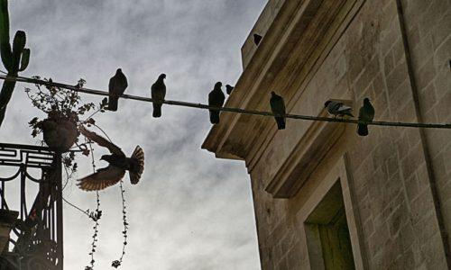 Arriva Santustata, l'app salentina che ti avverte della presenza di piccioni nella zona