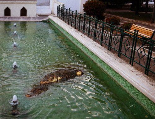 Arrivano gli alligatori del Mississipi, la villa comunale di Lecce ha la sua attrazione