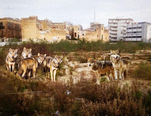 Piazza Tito Schipa: i lupi del boschetto di San Cataldo si sono impadroniti degli scavi