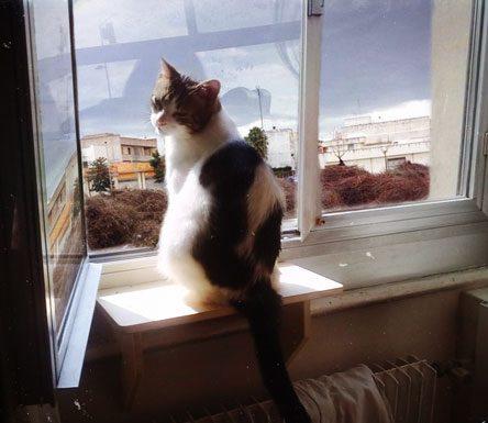 Isacco, il gatto felino che da sei anni osserva la Fòcara di Novoli dalla sua finestra