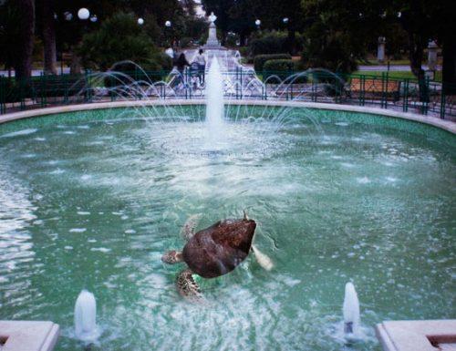 Torna la tartaruga nella villa comunale di Lecce, si recupera il valore del passato