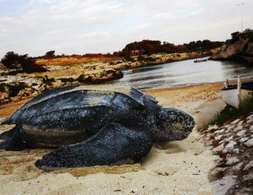 Spread sotto quota 100 dopo 5 anni, ora le tartarughe possono tornare a Porto Badisco