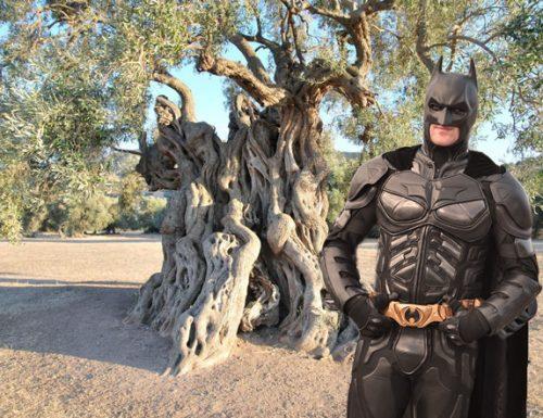 Emergenza Xylella: la Commissione Europea sta valutando l'intervento di Batman