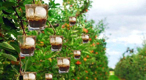 Xylella, nuovo focolaio scoperto sugli alberi da caffè in ghiaccio