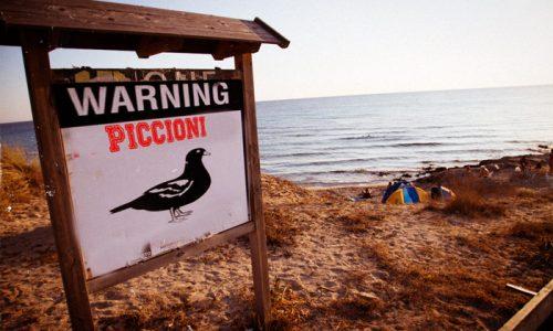 Gallipoli sorpassa Google, è il più grande motore di ricerca di piccioni