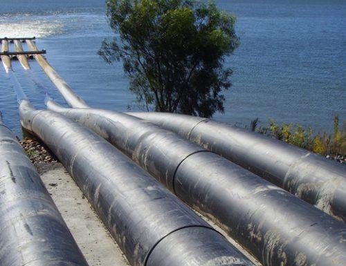I test confermano le ipotesi, la Xylella potrebbe attaccare i gasdotti