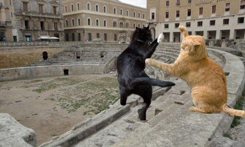 Ancora combattimenti tra animali nell'anfiteatro di Lecce, protestano animalisti e ambulanti