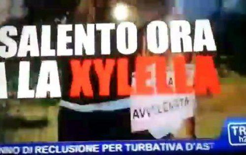 Il videomessaggio di Xylella contro le Gravine: ho scelto il Salento perché i tarantini su chini de siu
