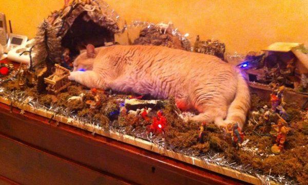 Paura al presepe di Martano, Gatto Kamikaze salta sul presepe gridando Miao Akbar!
