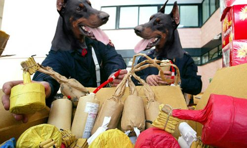 Urmu e Sajetta i cani sbirro di Surbo favorevoli a Botti di Capodanno