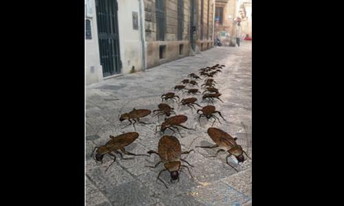 A Lecce si rinnova il miracolo della moltiplicazione delle malotule