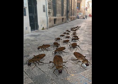 A Lecce Lecce si rinnova il miracolo della moltiplicazione delle malotule