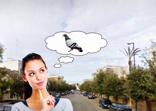 Ancora allarme nel Salento, 10 donne su 5 si credono di essere un piccione