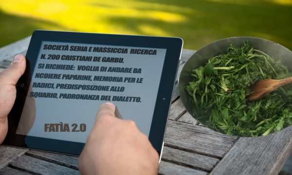 Professioni estive, 200 posti nel Salento per raccoglitori di paparine