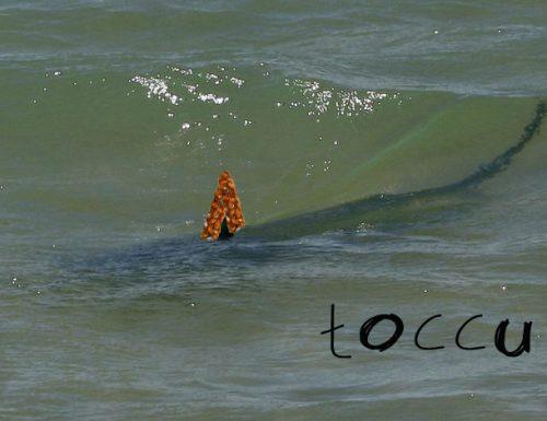 Allarme a San Foca: lo Squalo Cupeta rischierà l'estinzione per mancanza di bagnanti