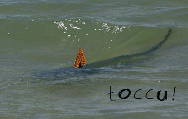 tuccu