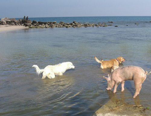 Estate e turismo, cani e puerci anche quest'anno preferiscono il Salento