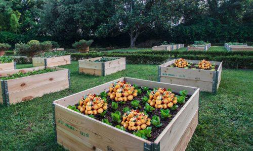 Inaugurato a Santa Rosa il primo orto urbano dove si coltivano purceddhruzzi