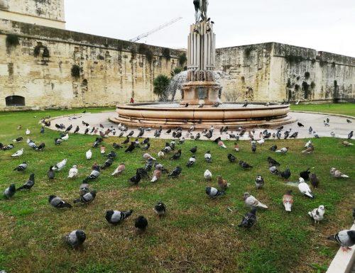 """A Lecce Lecce il più grande raduno mondiale di Piccioni. L'esperto: """"Sine moi a quai"""""""